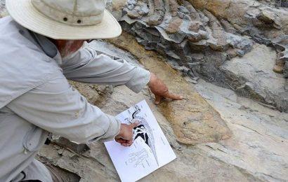 Chazumba: la tumba de criaturas gigantes en Oaxaca que vivieron hace 25.000 años