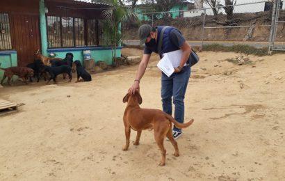 A dos años de creación, Juzgado para la Atención del Maltrato Animal ha atendido 435 denuncias