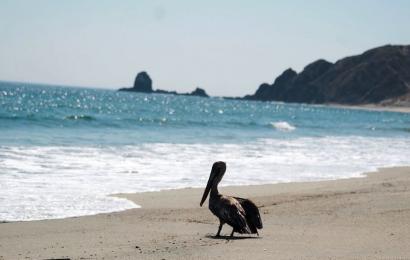 En Oaxaca, pedirán a presidentes municipales no cerrar playas en Semana Santa