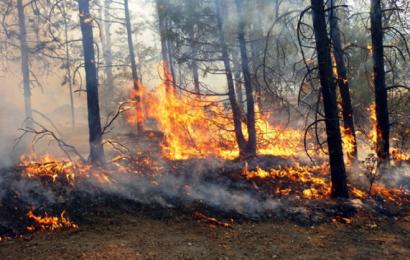 En Oaxaca, permanecen activos 2 incendios forestales