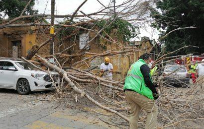 Cae árbol sobre una camioneta en la ciudad de Oaxaca
